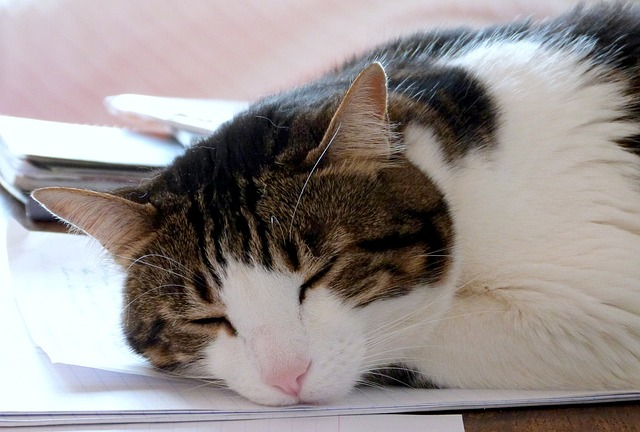 Cat asleep on desk