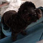 Darcy (Hazel Bird's dog)