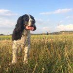 Matty in a field, in the sun