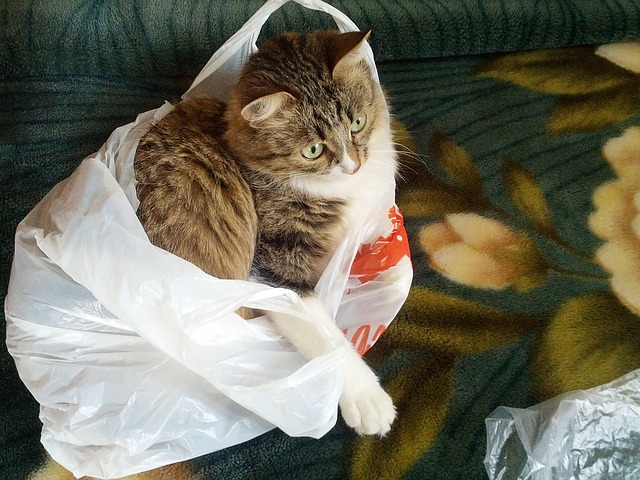 cat in a plastic carrier bag