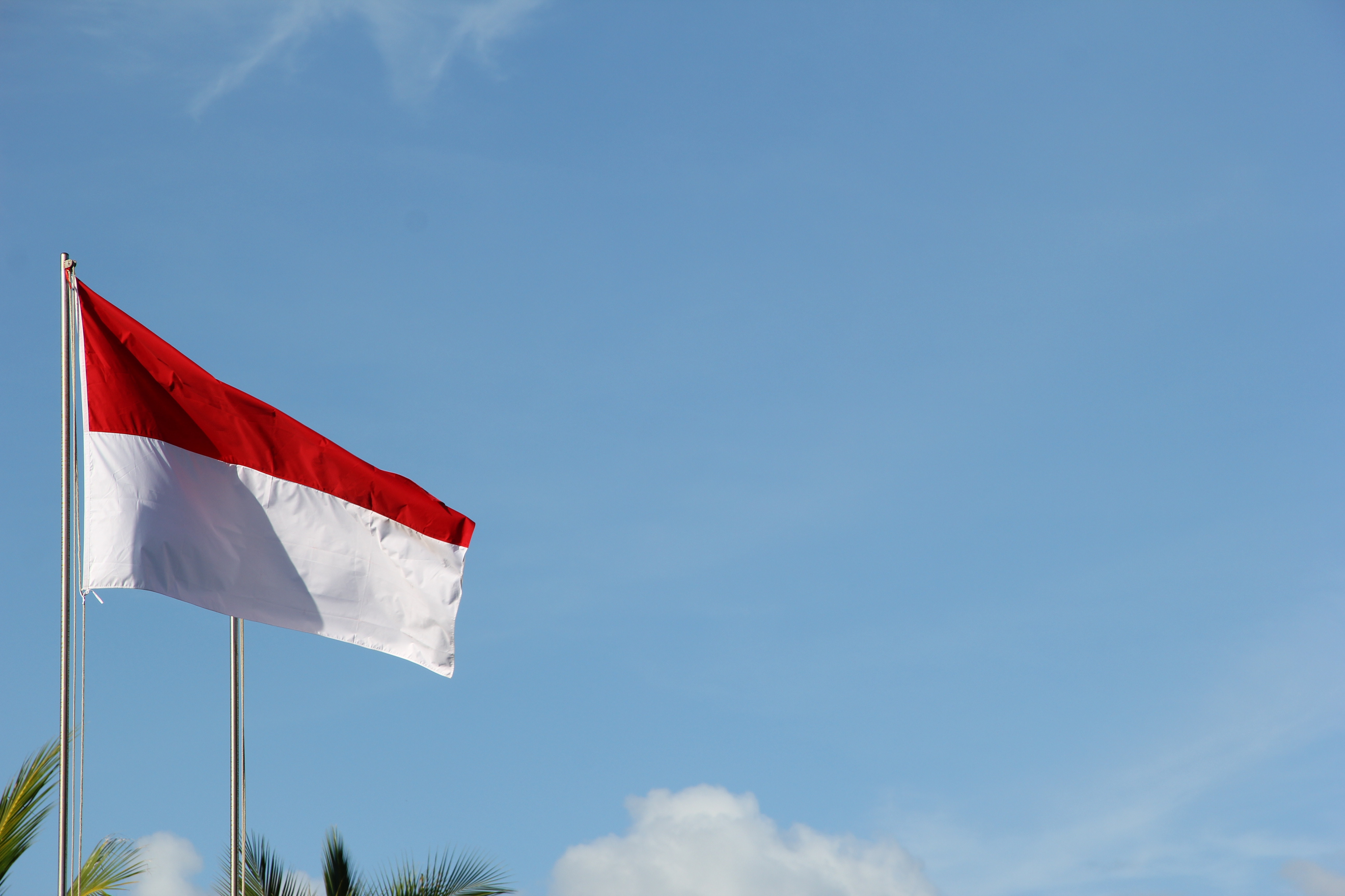 Indonesia flag blowing in the breeze in front of blue sky and palm trees